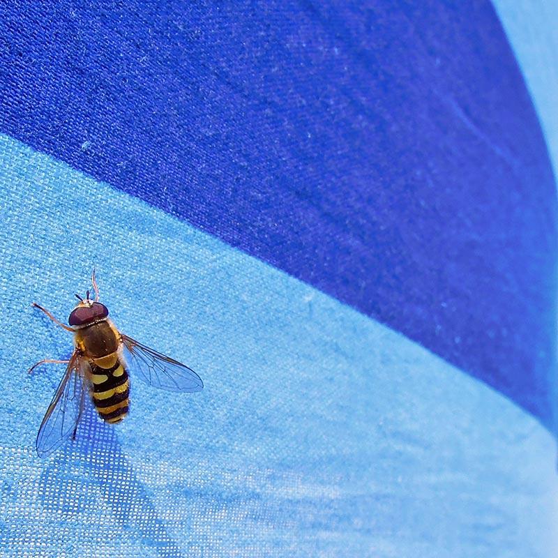 L'art du bad buzz